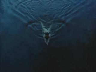 Nina Hosss The Heart Is A Dark Forest