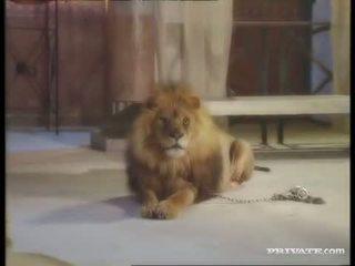 Hitam widow, itu roman dan itu lion