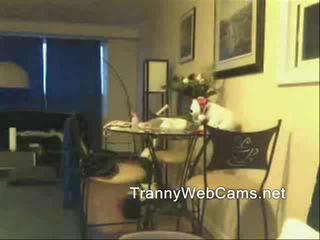 shemale, szarpnięcie, kamery internetowe