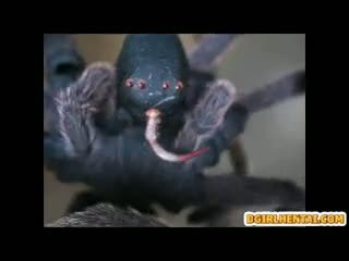 3d anime noķerti un grūti fucked līdz spider monstrs