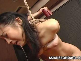 japanse, bdsm, slavernij