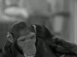 Tarzans 新 york adventure (1942)