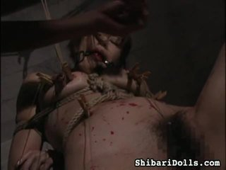 Collection Of Asian Porn Movies By Shibari Dolls