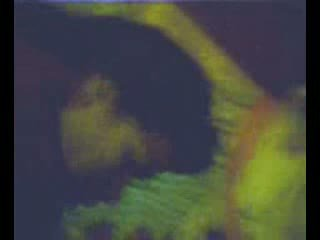 Zorrica monica tello prepa rio verde slp video